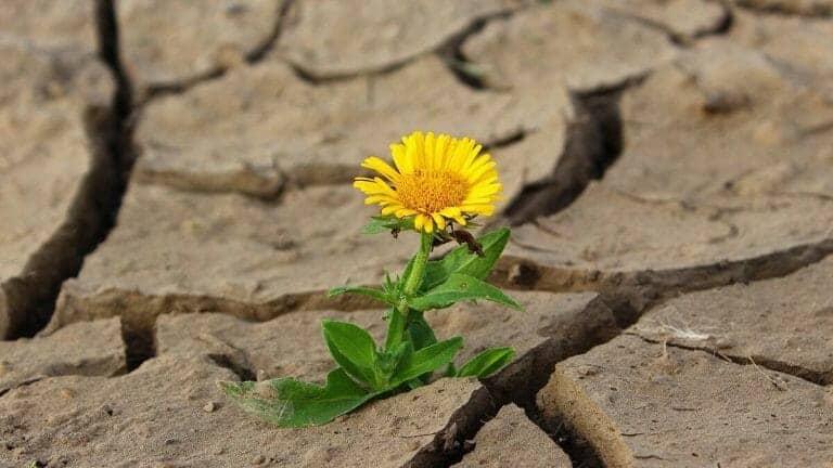 Flower in desert