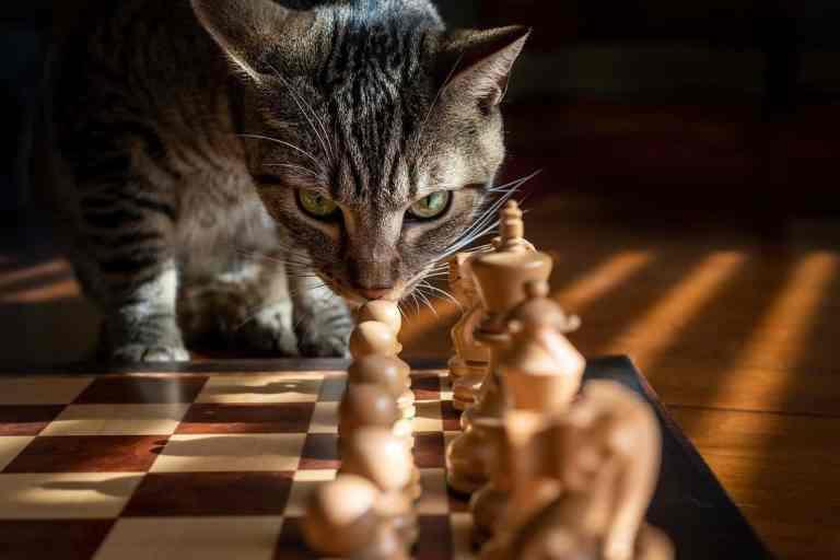 Cat Mate