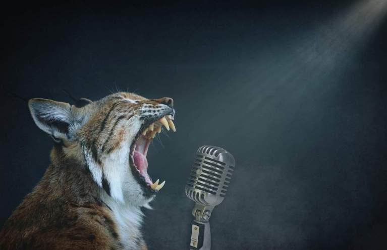 Lynx on the Mic