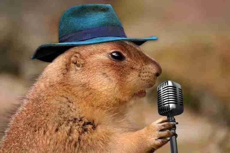 Prairie Dog on the Mic